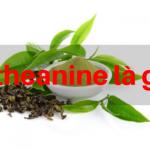 L-theanine là gì?