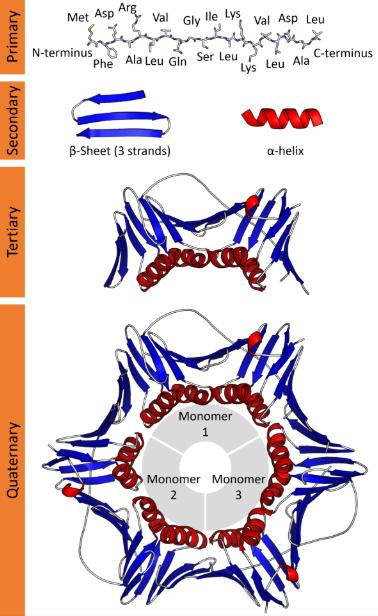 Cấu trúc của protein