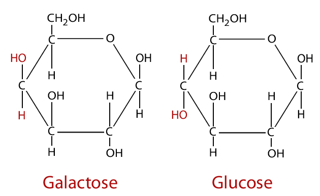 Cấu trúc của Galactose và glucose