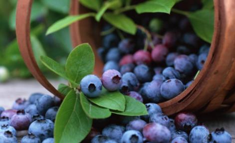 Natri benzoate cũng có trong trái cây như nam việt quất