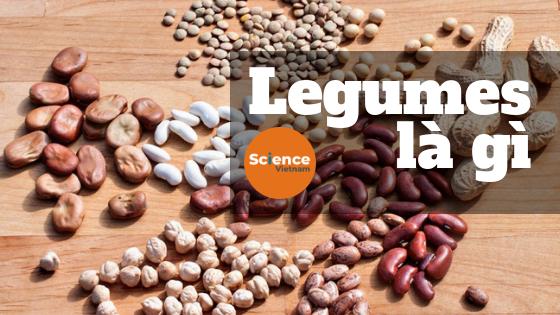 legumes là gì
