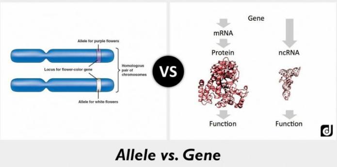 Alen và gen