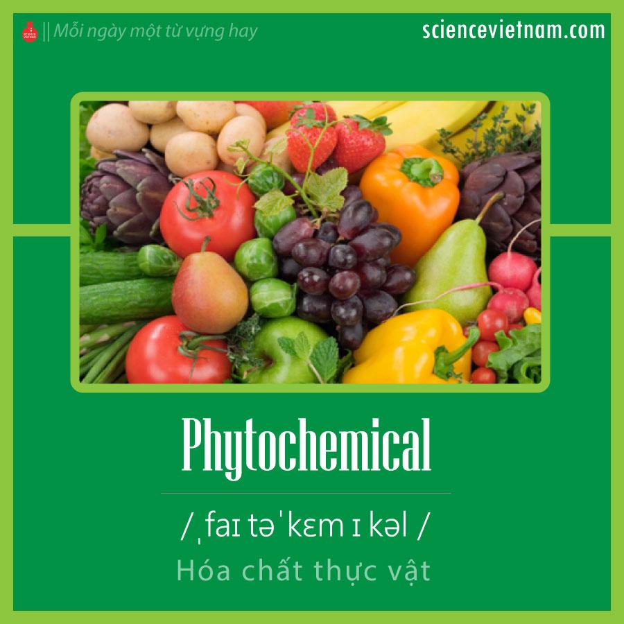 Phytochemical (Hóa Chất Thực Vật) Là Gì?
