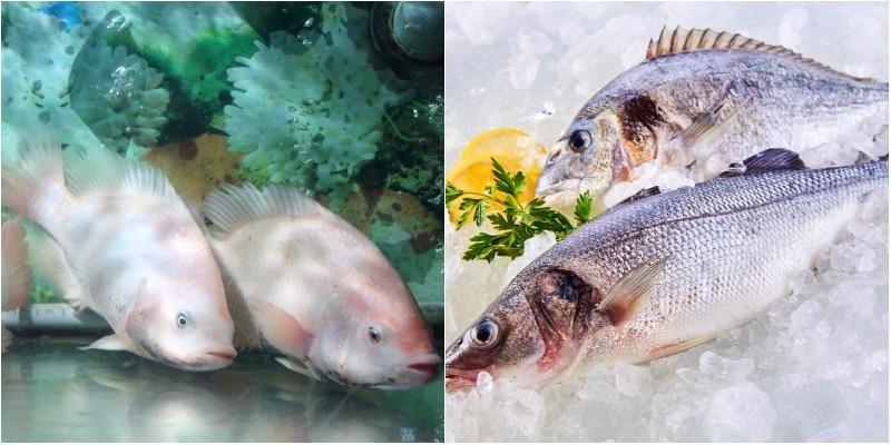 Cá tươi và cá đông lạnh